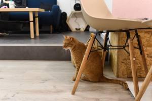 Meow cats café bar à chats à Aix en Provence chat roux