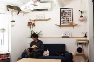 Meow cats café bar à chats à Aix en Provence intérieur