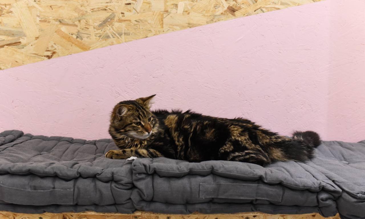 Meow cats café bar à chats à Aix en Provence chat à adopter